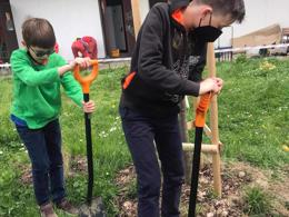 tree planting secondary