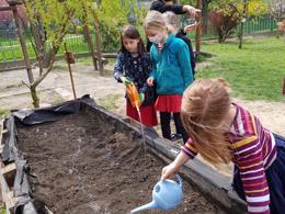 planting primary